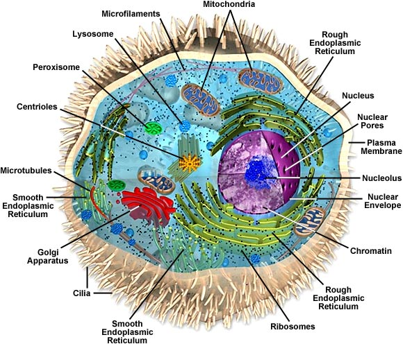 The Structure of Eye
